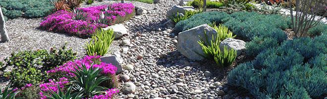 purpleflower-path