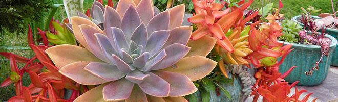 succulent-about